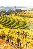 Autumnal vineyards, Austria Royalty Free Stock Image