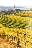Autumnal vineyards, Austria Royalty Free Stock Image