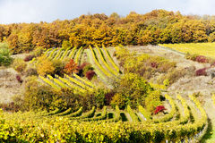 Autumnal vineyards, Austria Stock Photo