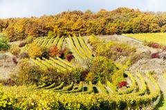 Autumnal vineyards, Austria Stock Photo