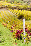 Autumnal vineyards, Austria Stock Photography