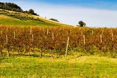 Autumnal Vineyards on badlands Stock Photography