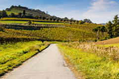 Autumnal Vineyards on badlands Royalty Free Stock Photography