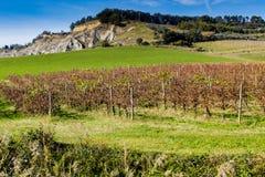 Autumnal Vineyards on badlands Stock Images