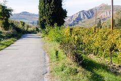 Autumnal Vineyards on badlands Royalty Free Stock Images