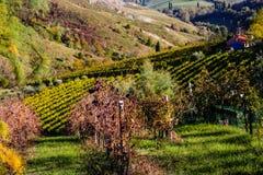 Autumnal Vineyards on badlands Stock Photos