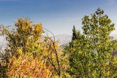 Autumnal Vineyards on badlands Royalty Free Stock Image