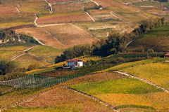 Autumnal vineyards on the hills of Piedmont, Italy. stock photo