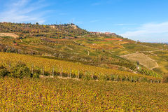 Autumnal vineyards in Piedmont, Italy. Stock Photography