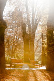 Autumnal walkway Royalty Free Stock Images