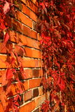 Autumnal wall Royalty Free Stock Images