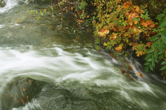 Autumnal waters. Running waters with autumn leaves Stock Image