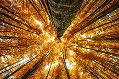 Autumnal wood Royalty Free Stock Photo