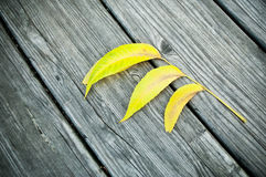 Autumnal yellow leaf Stock Images