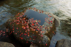 Autumnal zen. Autumnal background with red maple tree leafs and flowing water in zen-garden, Tokyo, Japan Stock Image