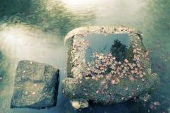 Autumnal zen Royalty Free Stock Photos