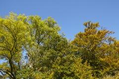 Autumnally drzewa wierzchołki Zdjęcia Royalty Free