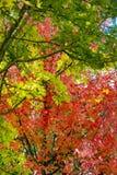 Autumnbird Royalty Free Stock Photo