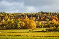 Autumnd skog Royaltyfri Fotografi