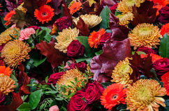 Autumnfeelings met cutflowers Stock Foto