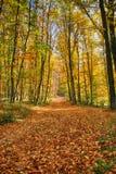Autumnin das Holz Stockfotografie
