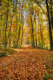 Autumnin the woods Stock Photography