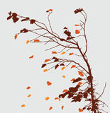 Autumnl branch Royalty Free Stock Photo