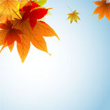 Autumnleaf Stock Foto