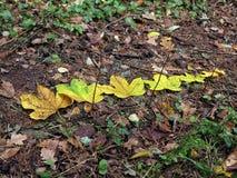 Autumnleaves Fotografía de archivo libre de regalías