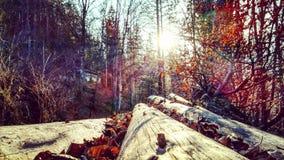 Autumnmagic Стоковая Фотография RF