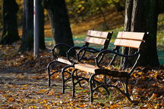 Autumnn, bench, park. Wooden bench in autumn scenary Royalty Free Stock Images