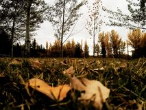 Autumnnnn Foto de Stock Royalty Free