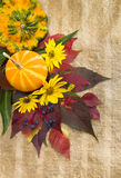 Autumn ripe pumpkins, foliage, flowers. Stock Photography