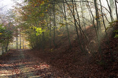 Autumnroad through the forest with bright side sun rays Stock Images