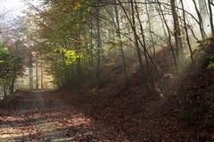 Autumnroad a través del bosque con el sol de la parte positiva irradia Imagenes de archivo