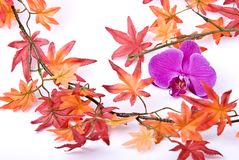 Autumns blossom Stock Photography