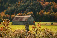 Autumns colors. Old barn among the autumn colors of fall Stock Image