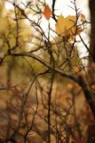 Autumns leaves. And trees near Riga royalty free stock image