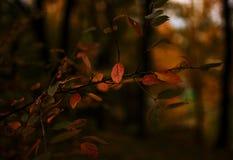 Autumns leaves. And trees near Riga stock photos