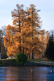 Autumns tree. At park with frosted river and ducks Royalty Free Stock Images