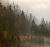 AutumnTrees Στοκ Εικόνα