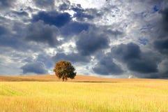 autumntreewheatfield Arkivbild