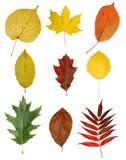 Autumny Blätter getrennt Stockbilder