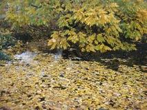 Autums-Blätter auf einem Teich Lizenzfreie Stockbilder