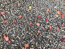 Autums-Blatt werden aus den Felsengrund zerstreut stockbilder