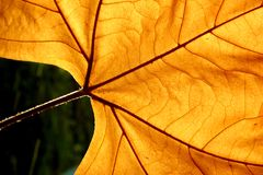 Autums leaf Royalty Free Stock Photos