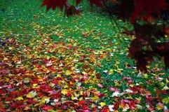 Autun cardiff park Stock Photo
