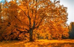 Autunm树在公园,完善秋天风景 免版税库存照片