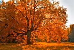 autunm δέντρο Στοκ φωτογραφία με δικαίωμα ελεύθερης χρήσης
