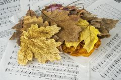 Autunm Leaves And Music Sheets Stock Photo